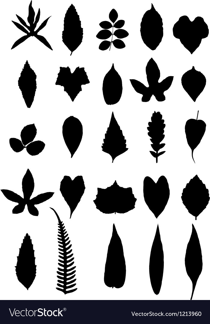 Leaves isolate on white background vector