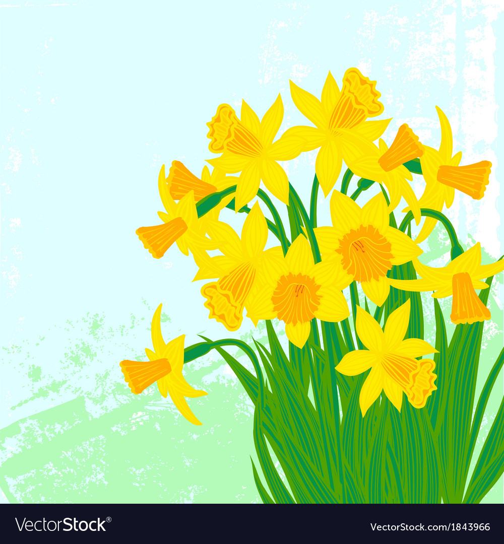 Card with daffodils on textured background vector