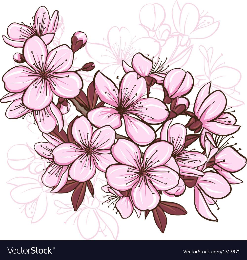Cherry blossom vector