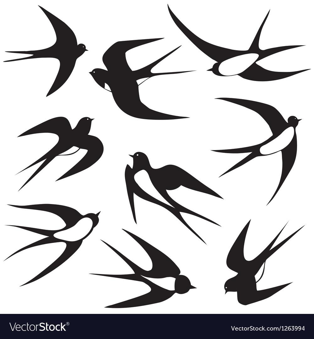 Bird swallow set poses vector