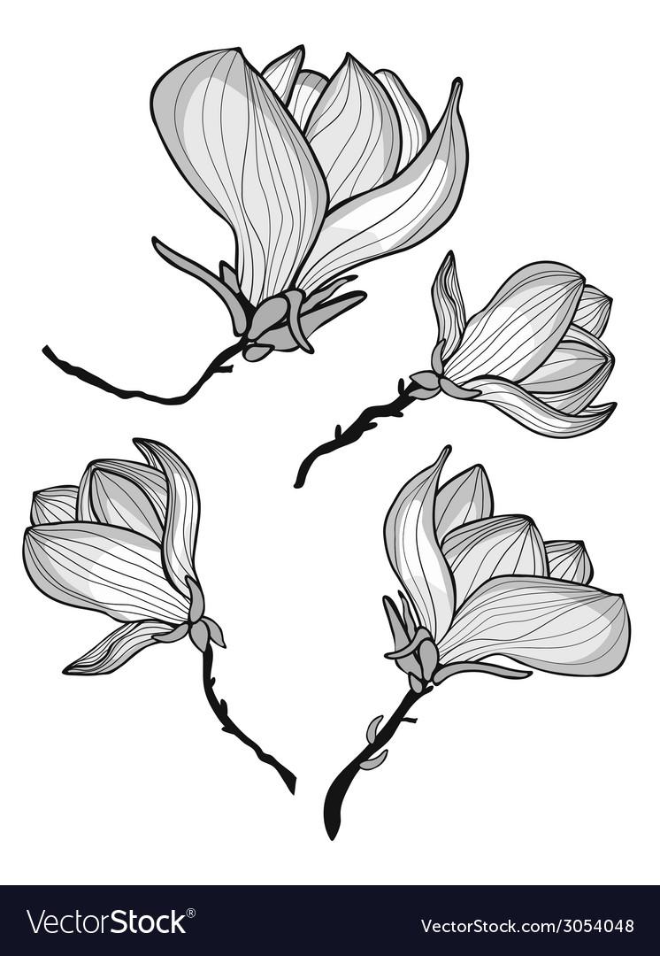 Beautiful magnolia flowers vector