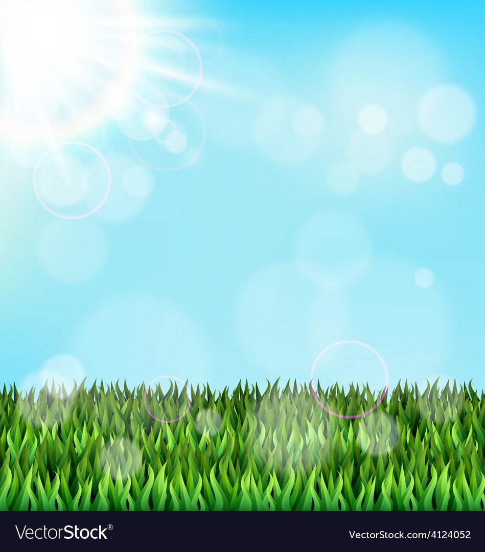 Green grass lawn with sunlight on blue sky floral vector