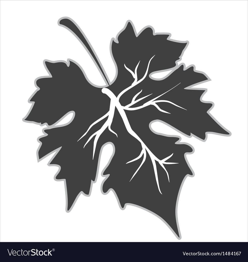 Grape leaf vector