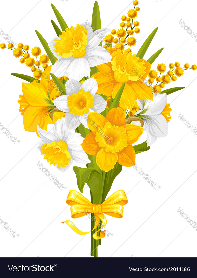 Daffodils and mimoses vector