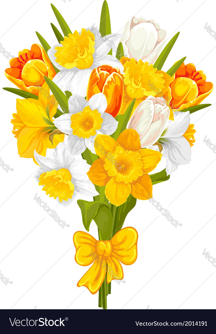 Daffodils and tulips vector