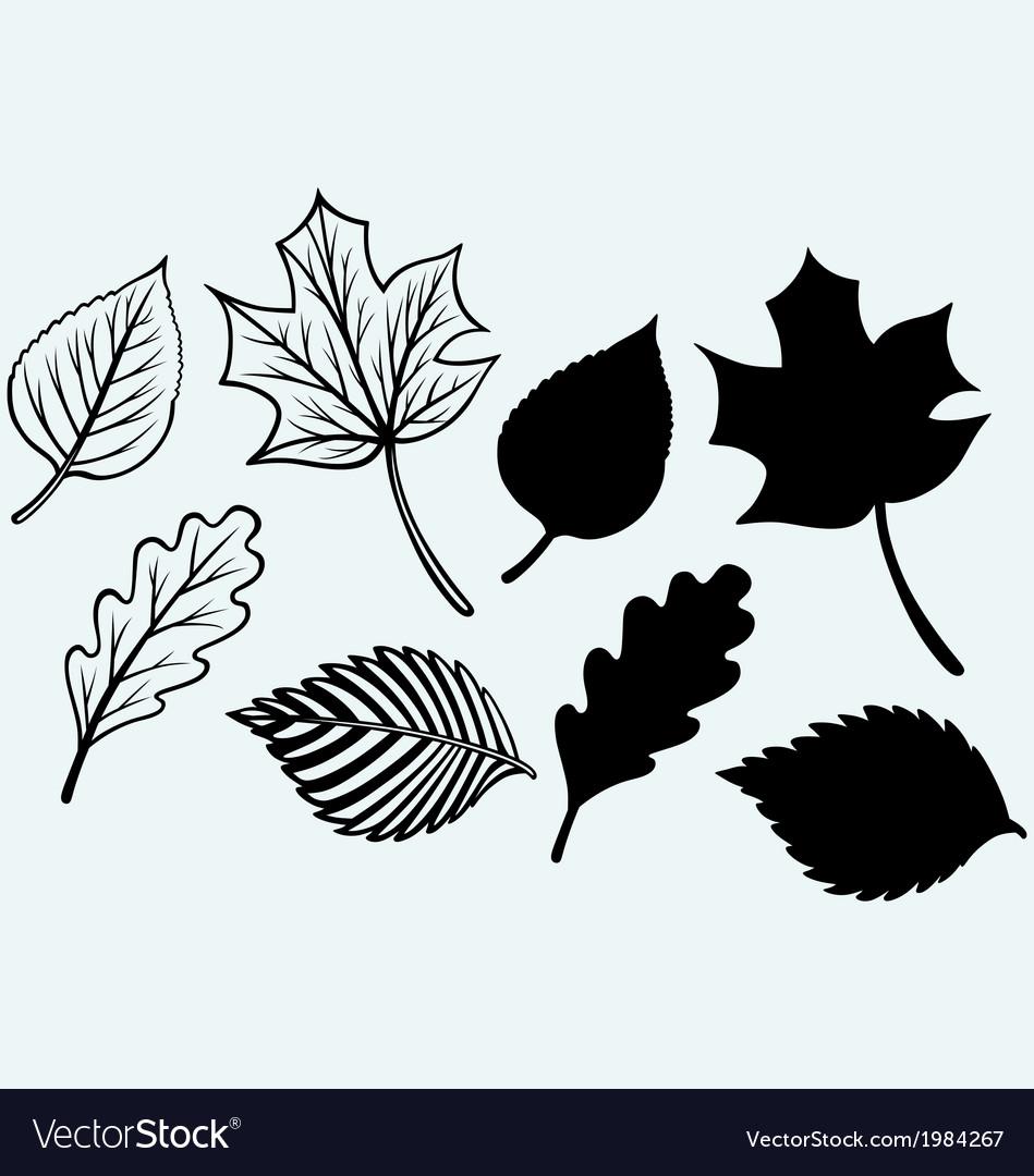 Maple leaves set vector