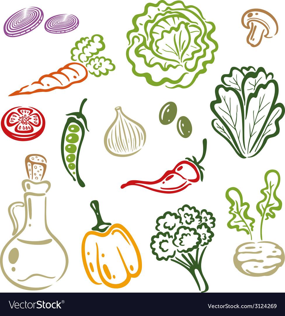 Salad vegetable vector