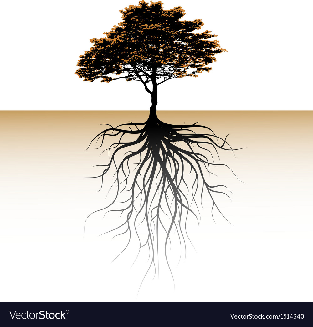 A tree with a visible root vector