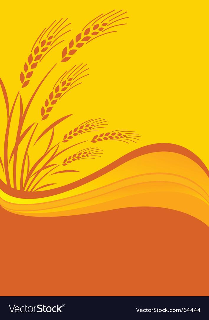 Cereal crop vector