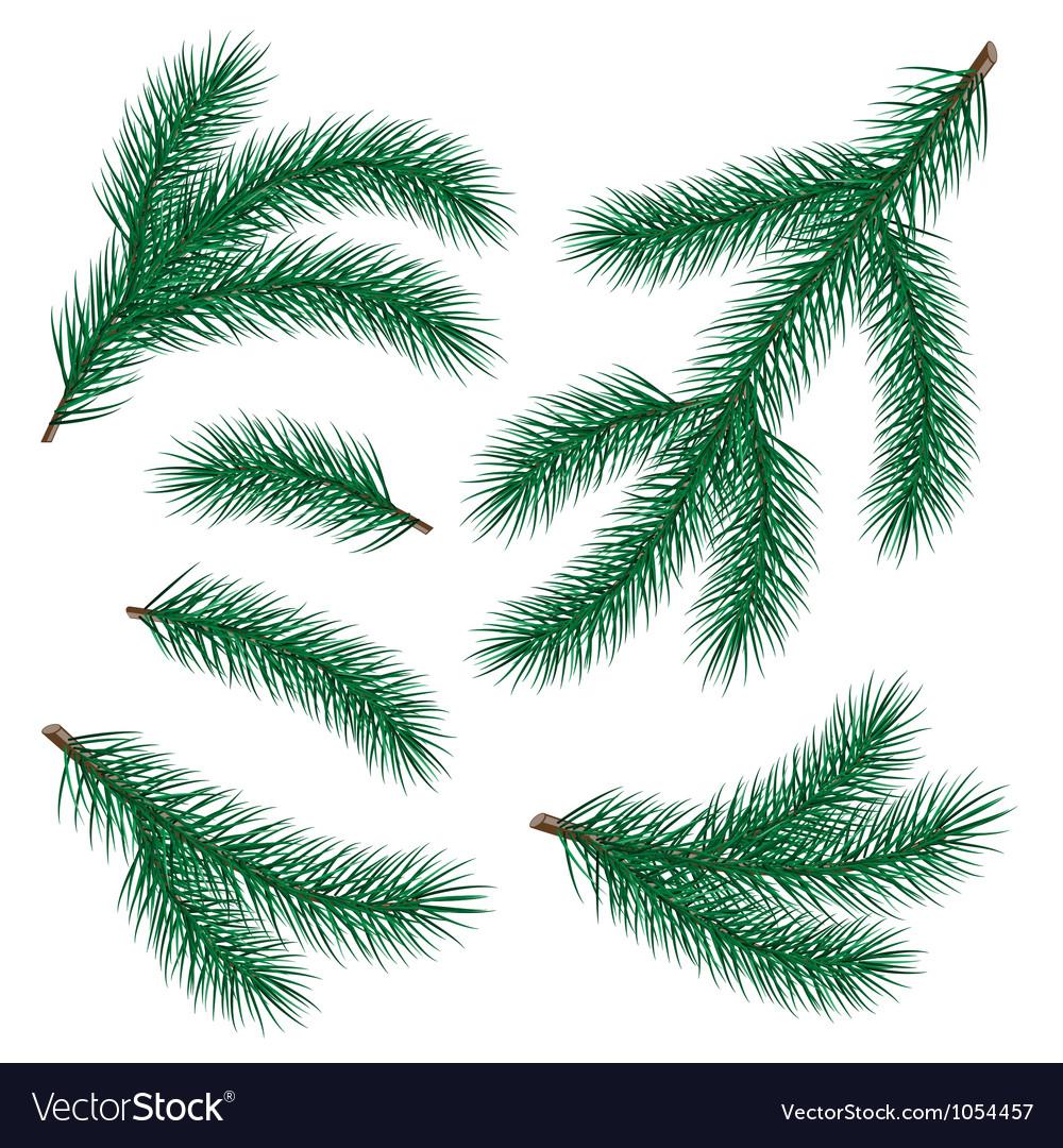 Set of fir branch vector