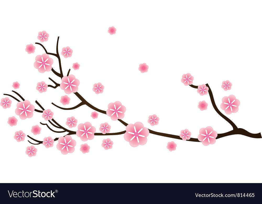 Sakura cherry blossom vector