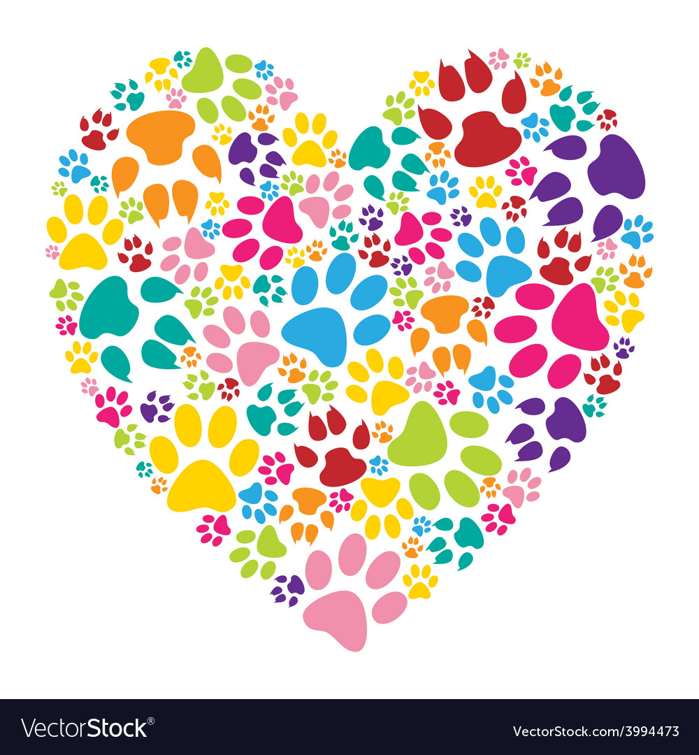 Heart paw print vector