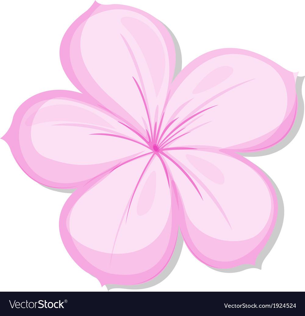 A five-petal pink flower vector