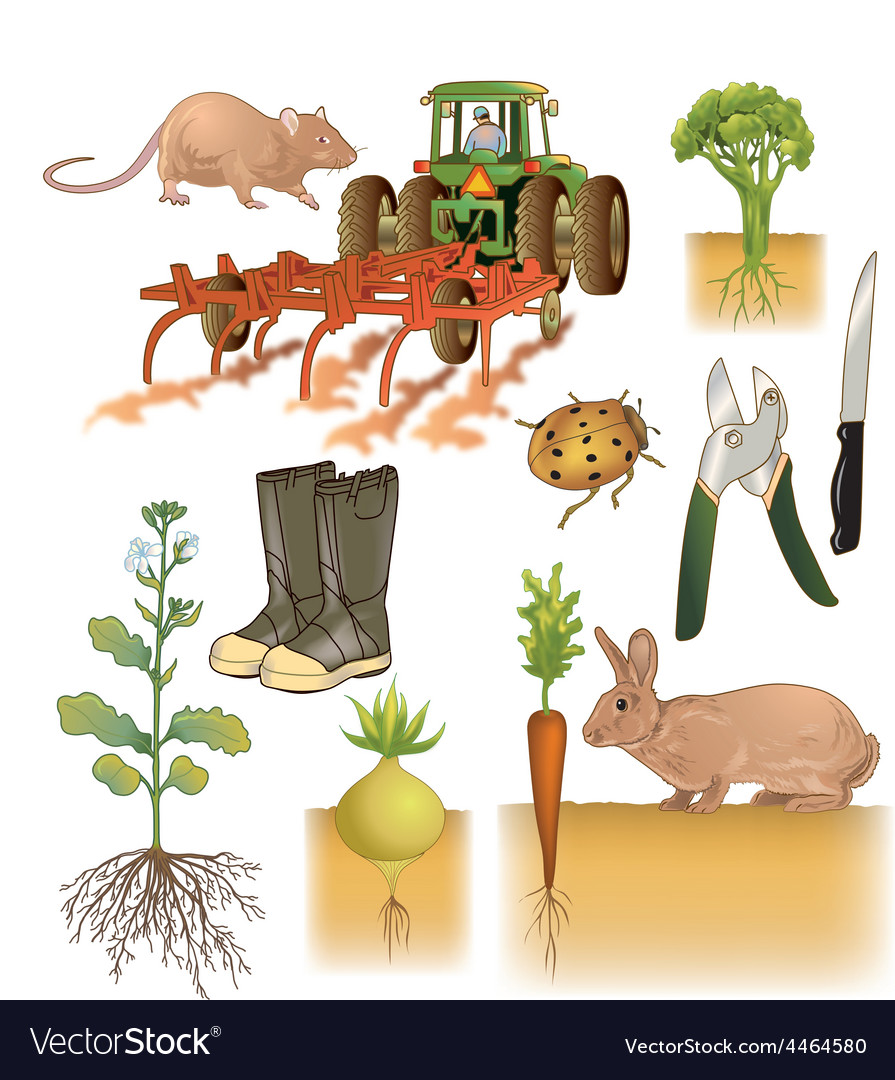 Farming and agriculture vector