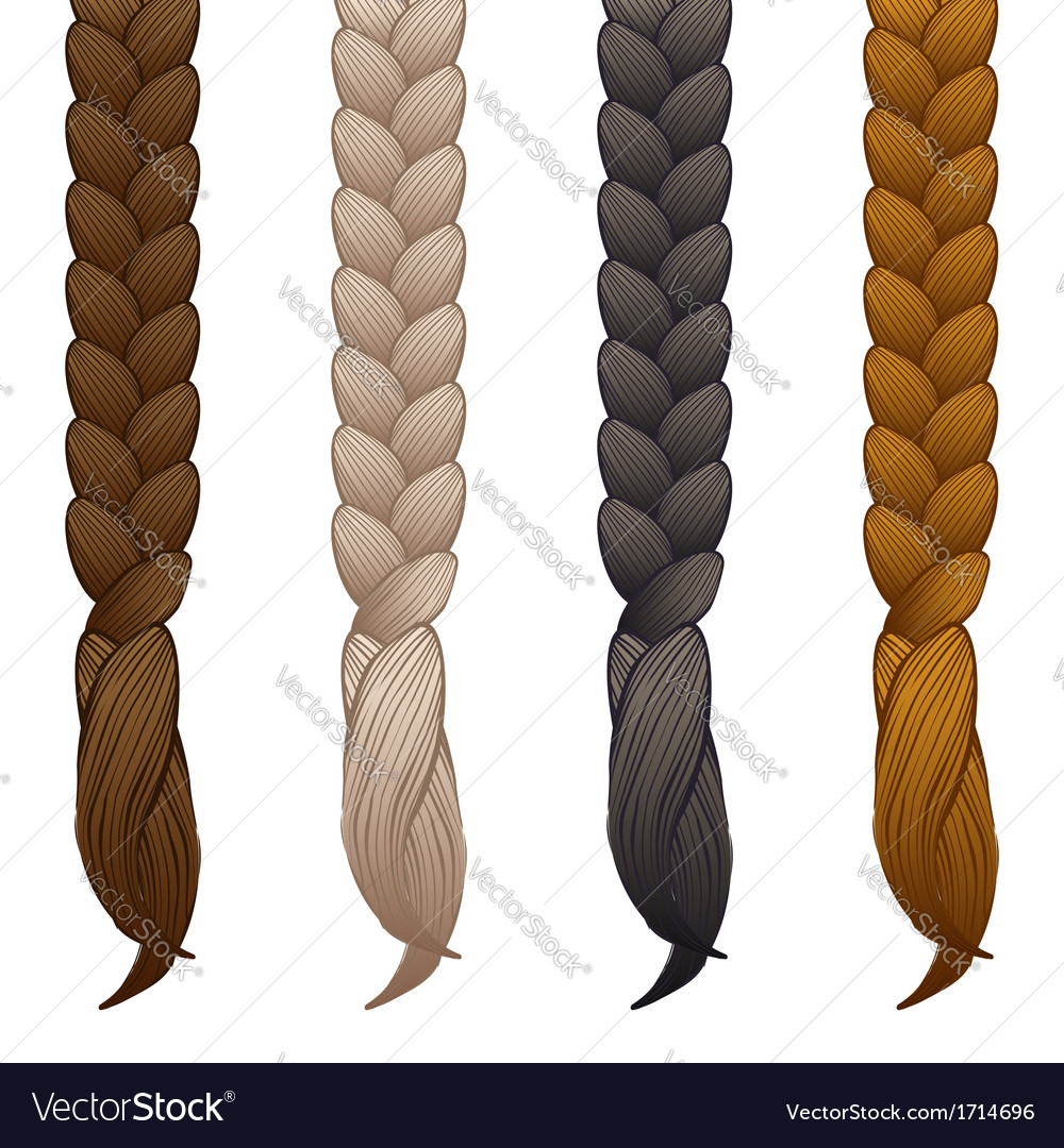Braids isolated on white background vector