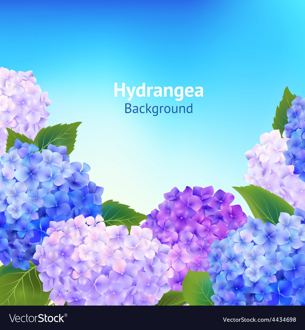Hydrangea flowers background vector