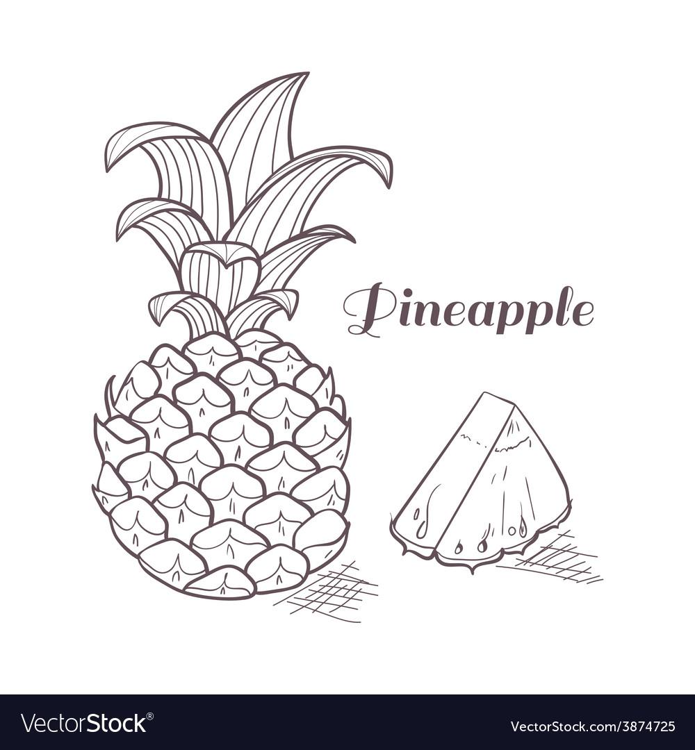 Engraving pineapple vector