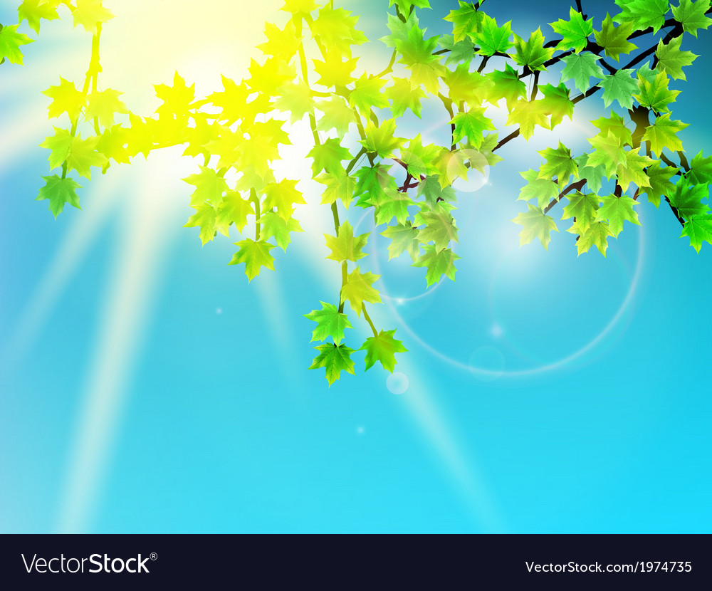 Green leaves with sun ray vector