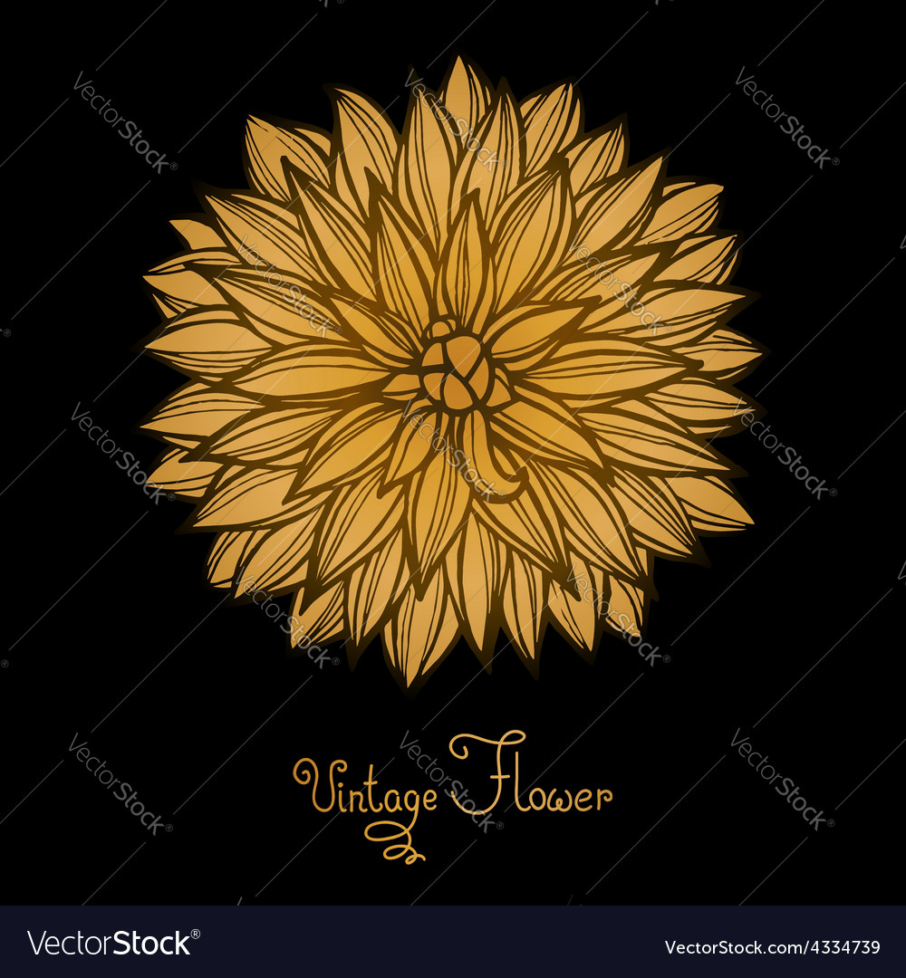 Bright dahlia flower isolated for design vector