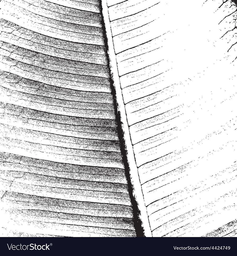 Leaf texture vector