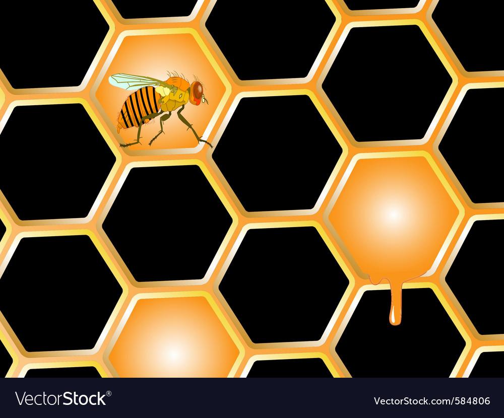 Bee and honey vector