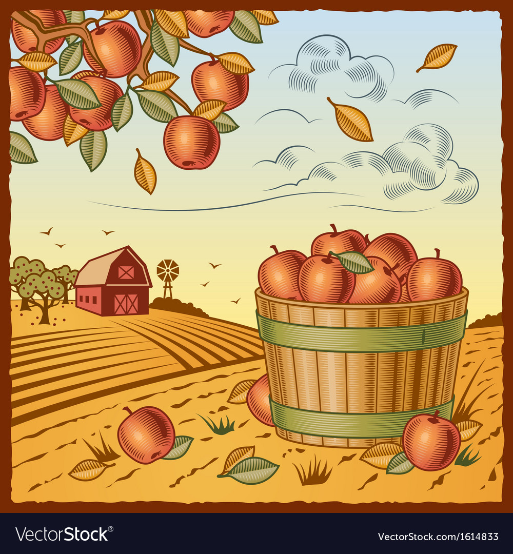Landscape with apple harvest vector