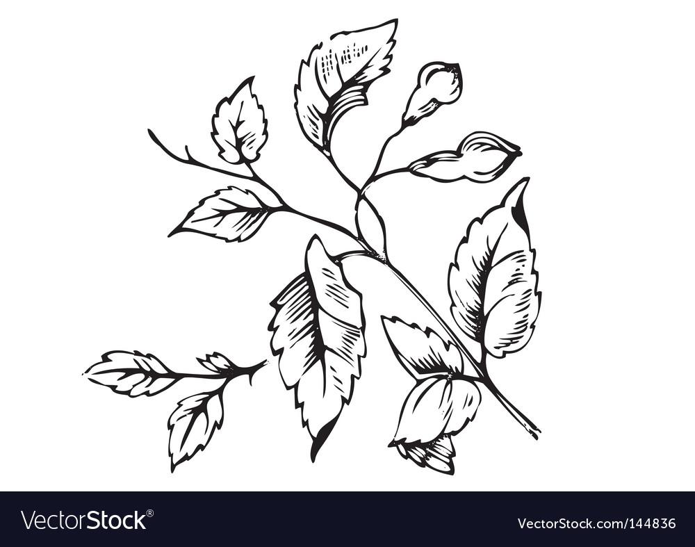 Antique foliage engraving vector