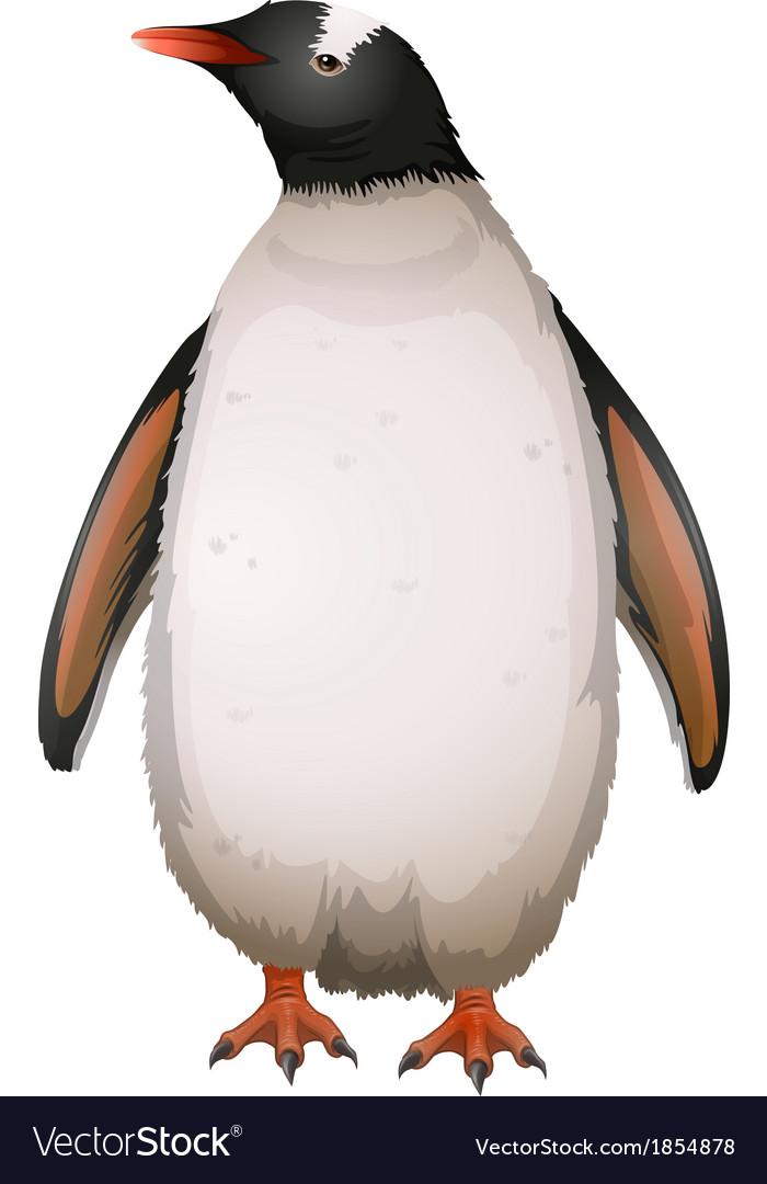 Gentoo penguin vector