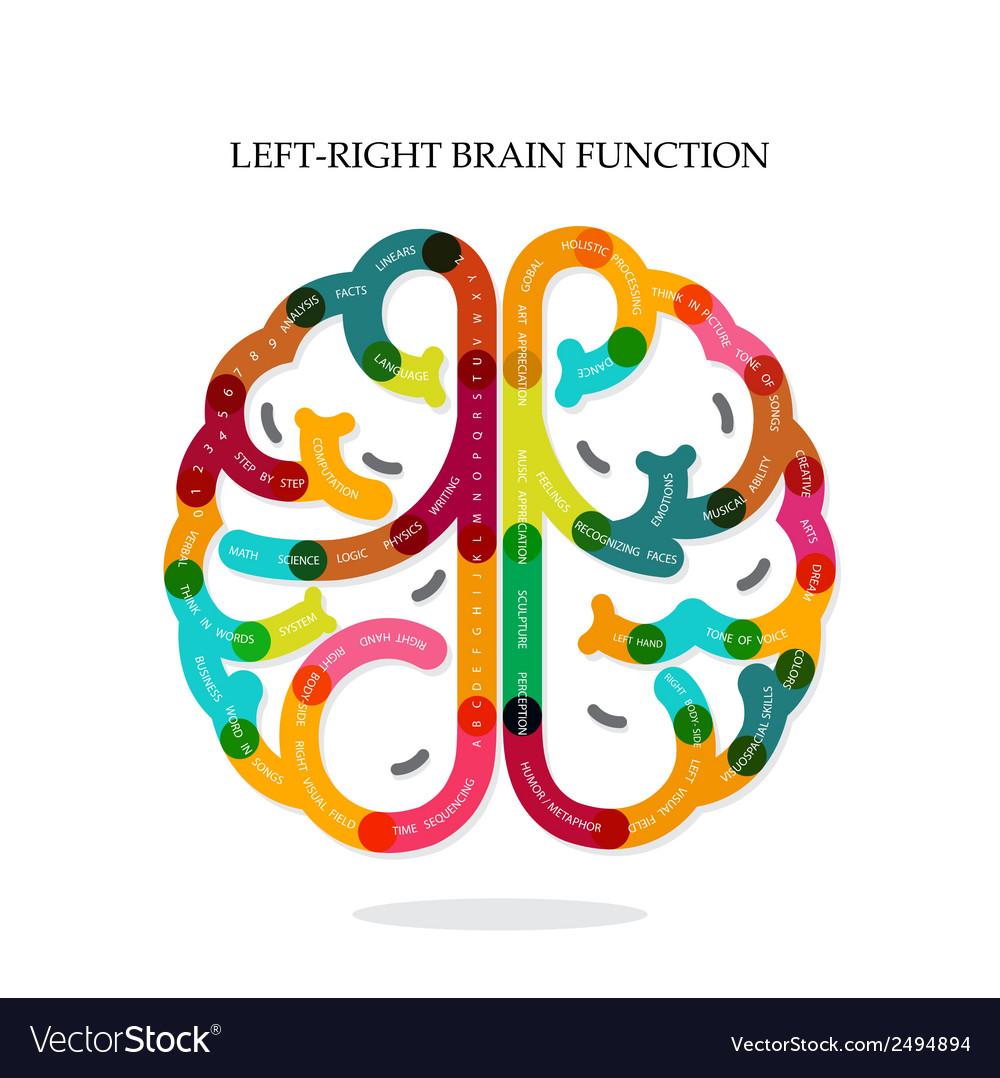 Creative infographics brain function vector