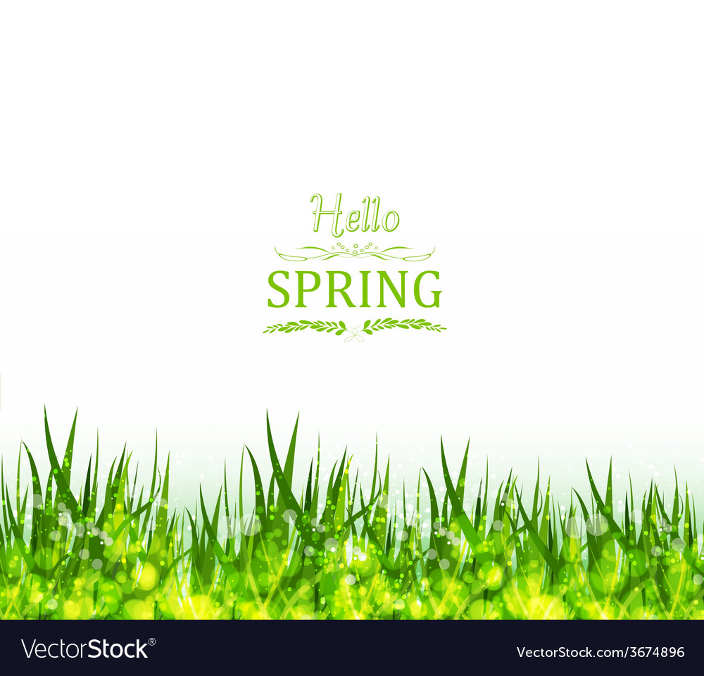 Hello spring background with grass vector