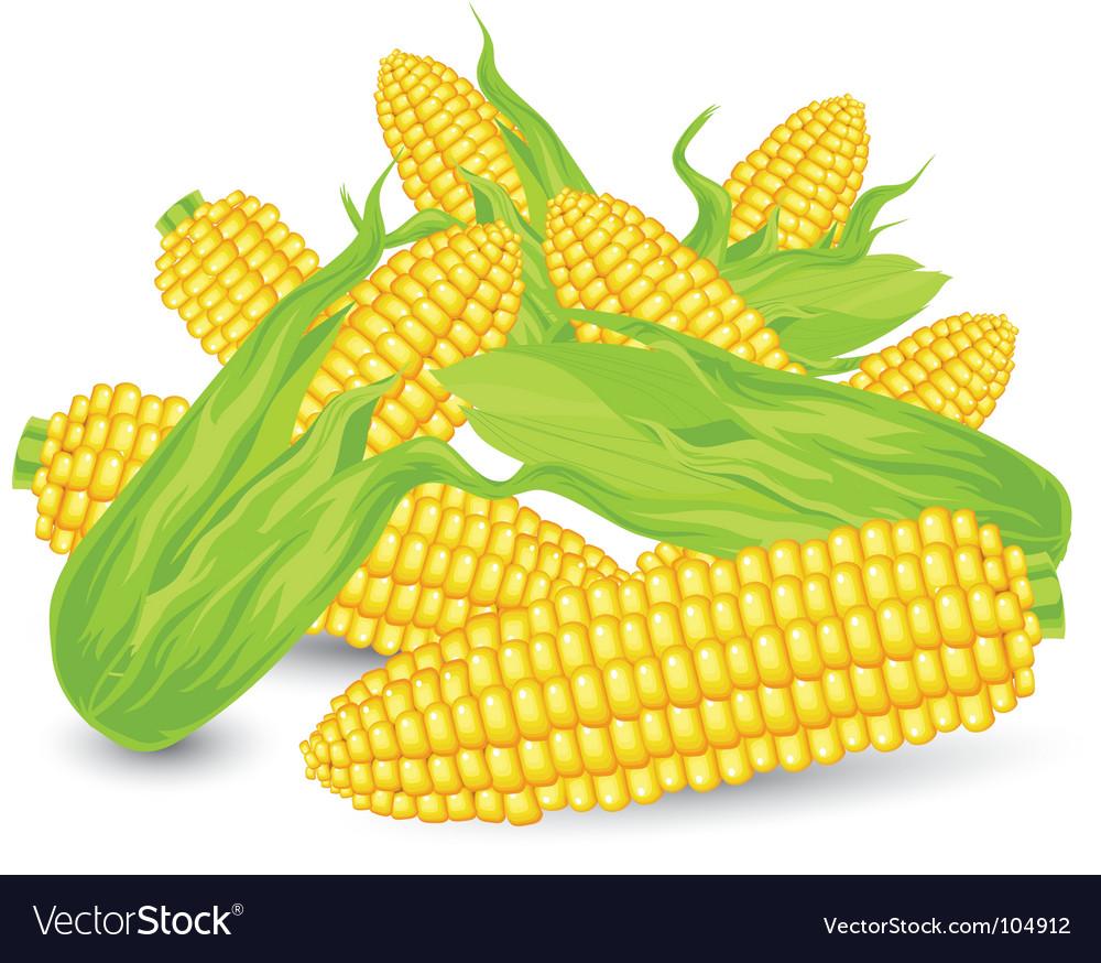 Hill ears of ripe corn vector
