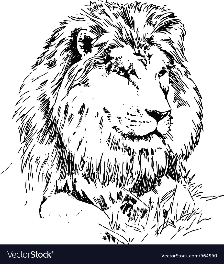 Lion lying on grass hand drawing black on white vector
