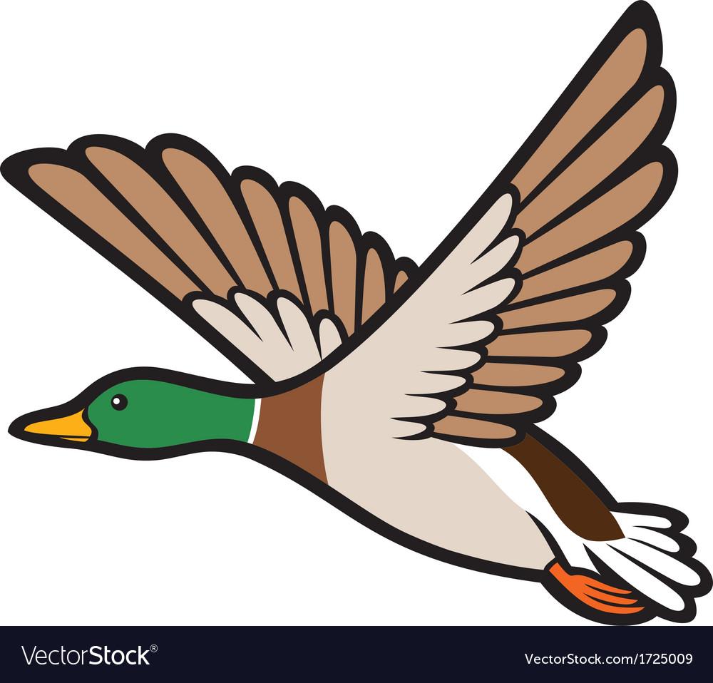Mallard duck flying vector