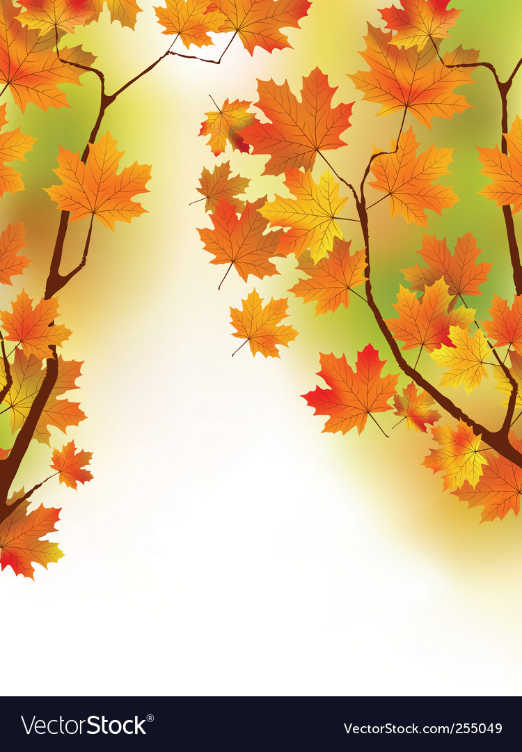 Autumn maple leaves in sunlight vector
