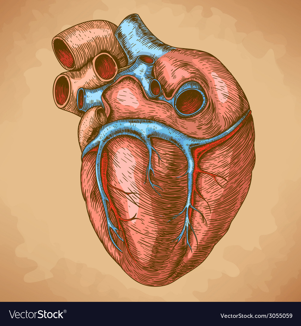 Engraving heart retro vector