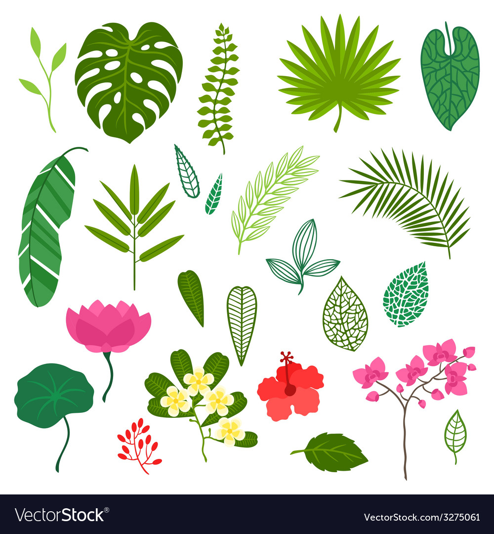 Set of stylized tropical plants leaves and flowers vector