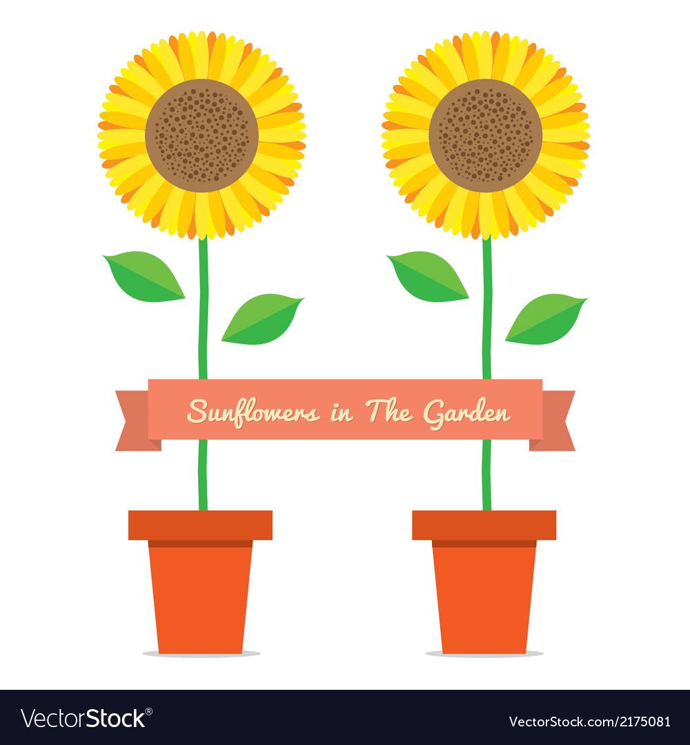 Sunflowers pot plant vector