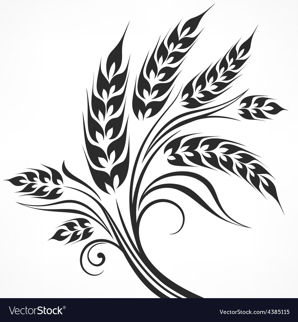 Stylized ears of wheat in vector