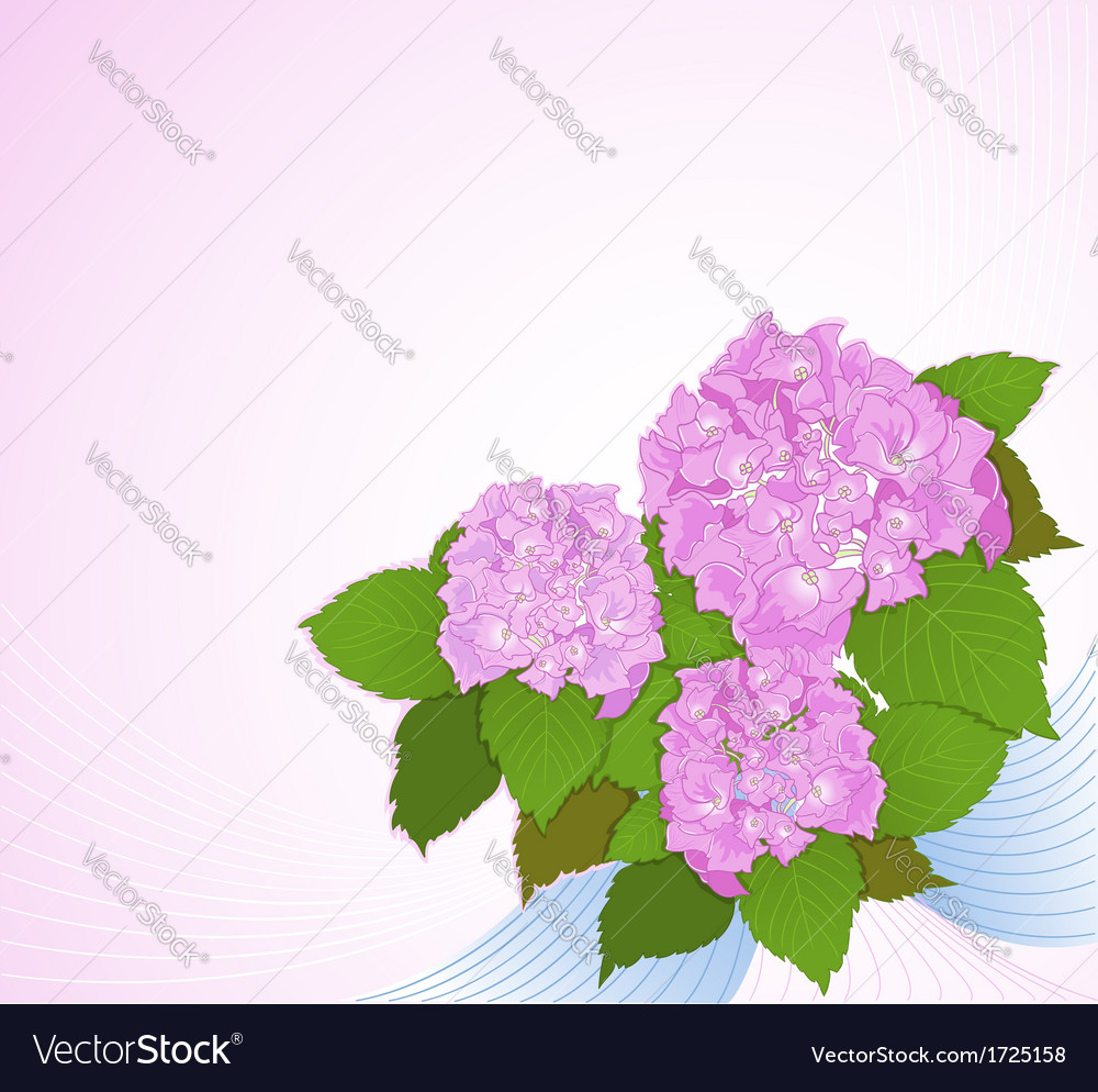 Background with hydrangea decorative background vector