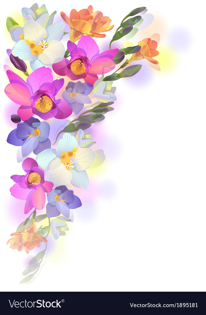 Spring card with gentle freesia flowers vector