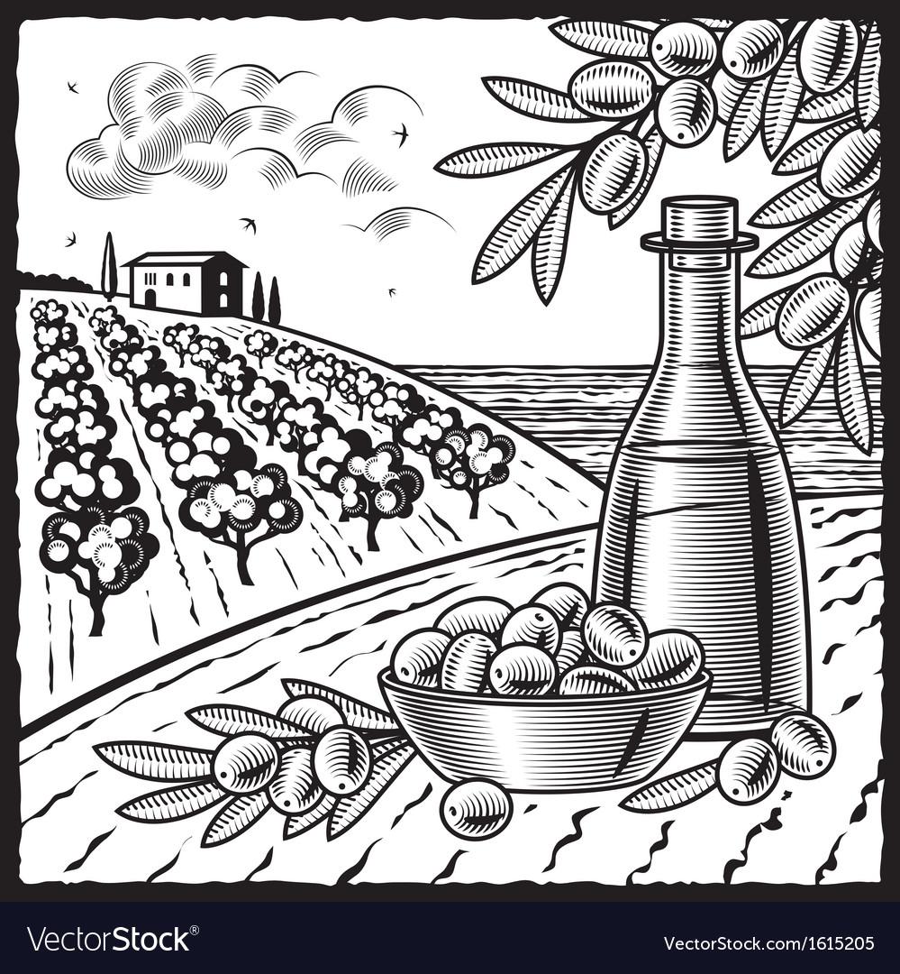 Olive harvest black and white vector