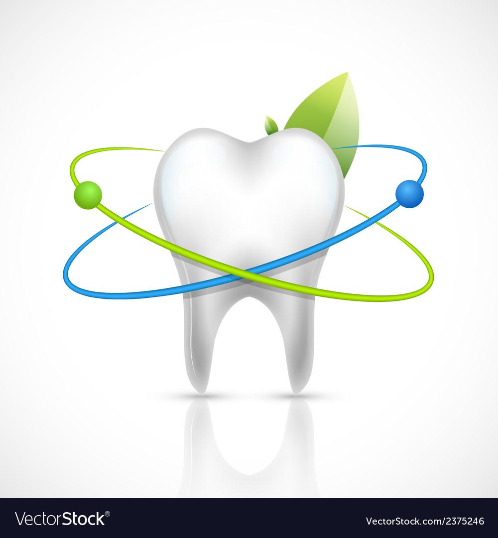 Healthy tooth realistic vector