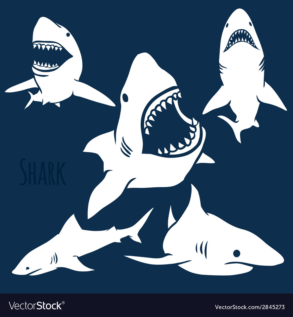 Danger shark silhouettes set vector