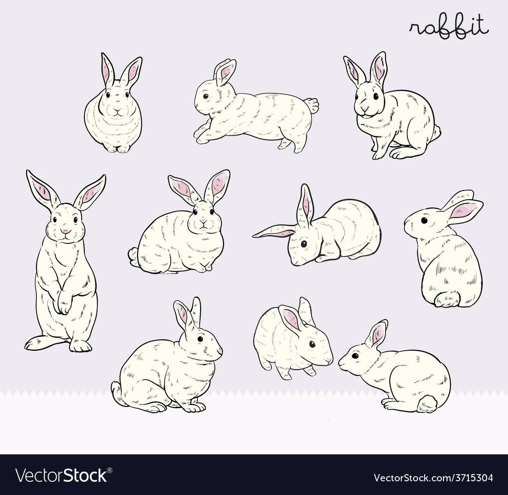 Rabbit set vector