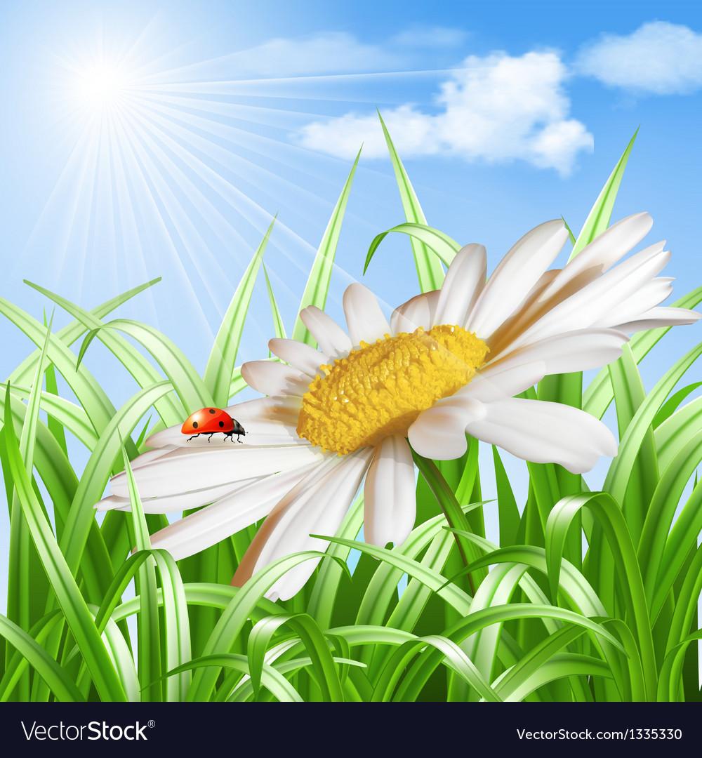 Ladybird on daisy flower vector