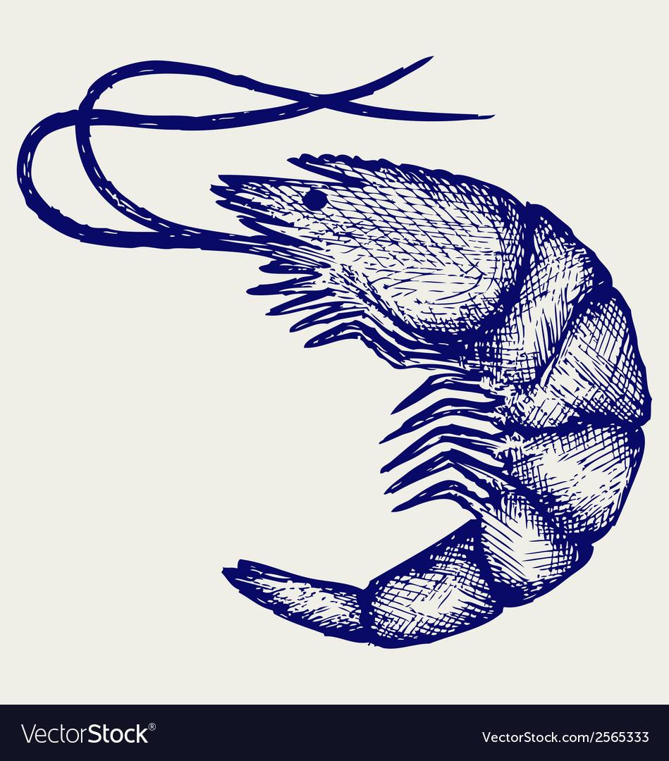 Boiled shrimp vector