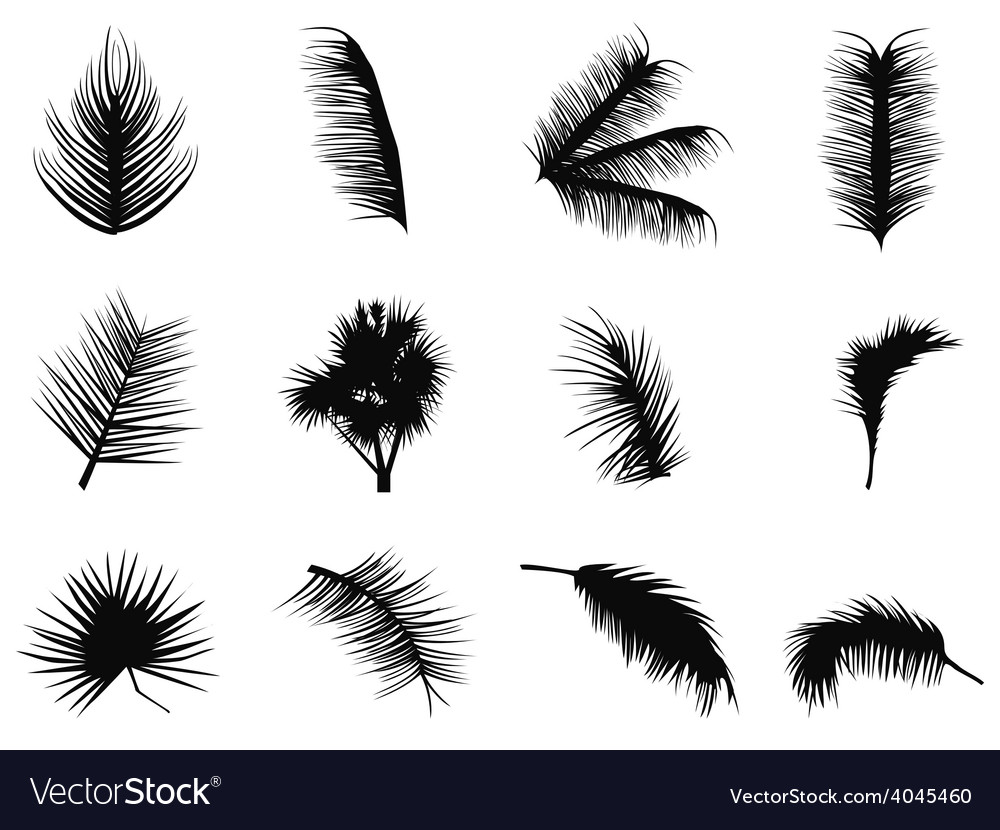 Palm tree leaves silhouettes vector