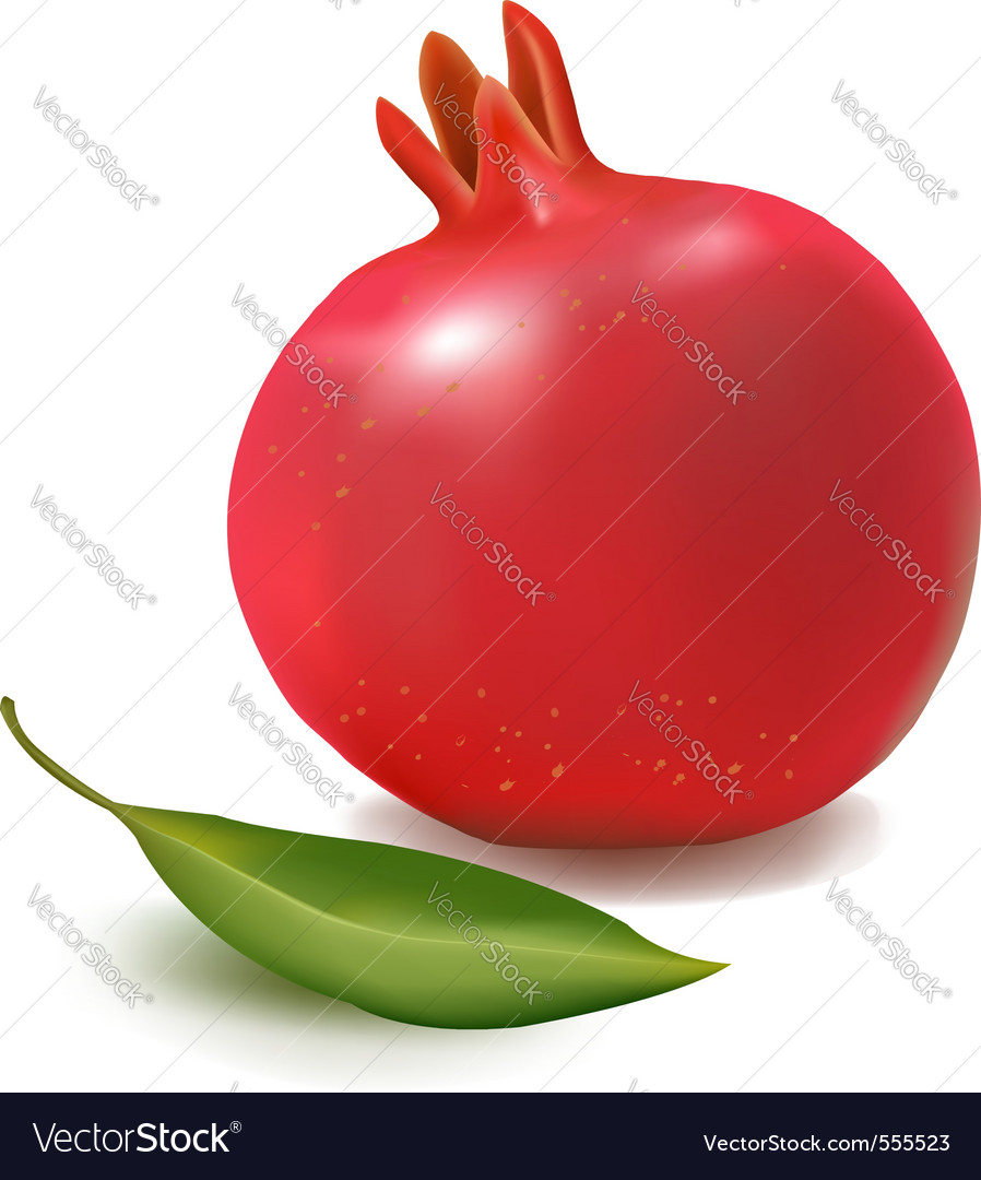 Fresh pomegranate vector