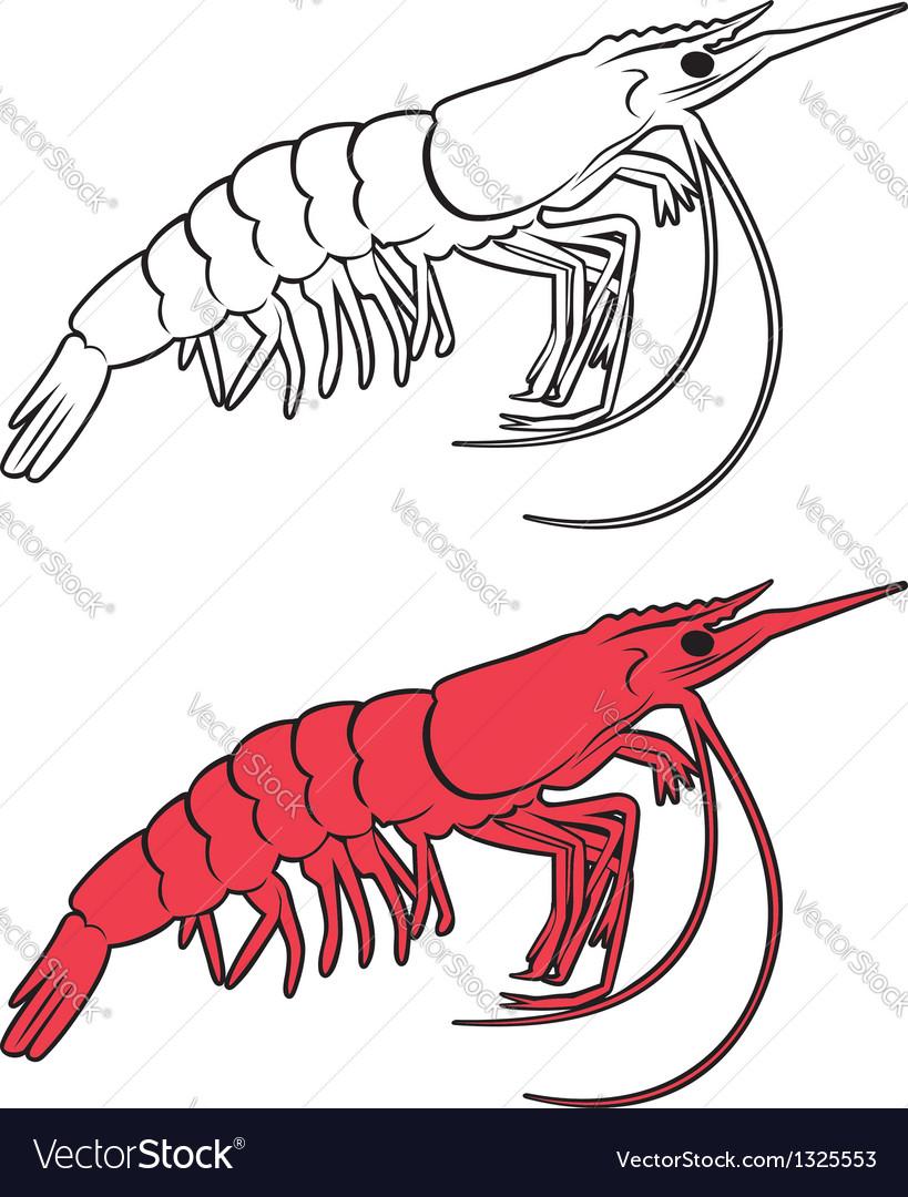 King prawn vector