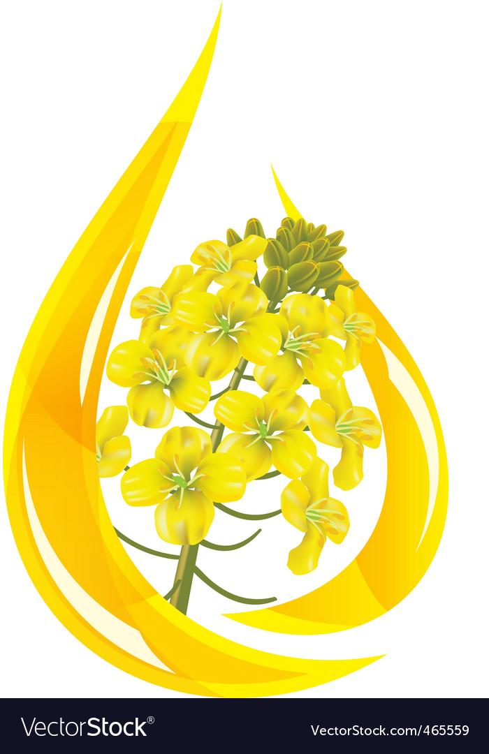 Canola oil vector